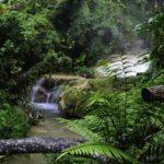 Dschungel, Urwald, Fluss