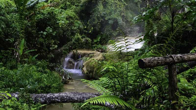 Essen wie im Dschungel: Mit Magerkost und Insekten zu besserer Fitness?