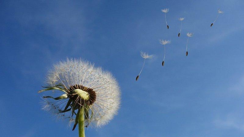 Allergie Guide Pollenallergie Hausstauballergie